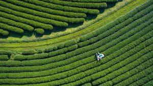 Çay Ticareti