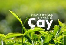 Çayın Türkiye Serüveni