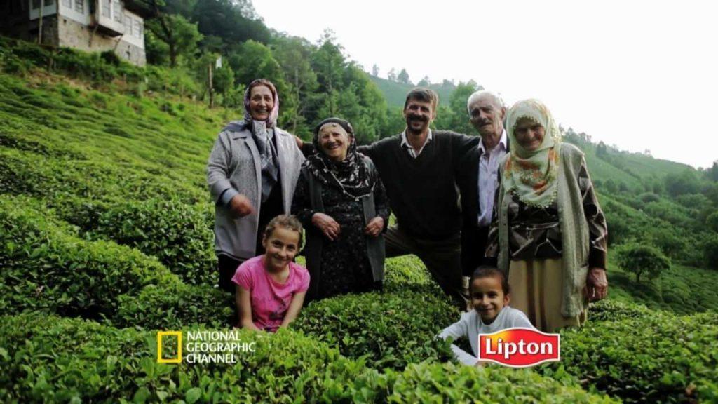 Çay Tarımı Projesi
