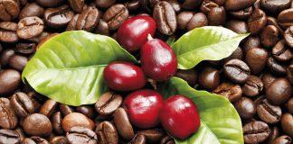 Kahve, nasıl kahve oluyor? Nasıl yetişiyor?